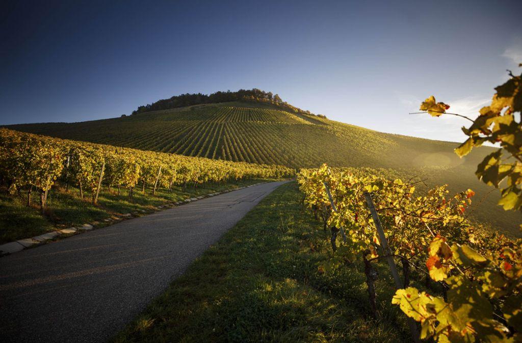 Die Sonne lässt das Herbstlaub und die Weinberge leuchten – wie hier am Kleinheppacher Kopf.  Foto: Gottfried Stoppel
