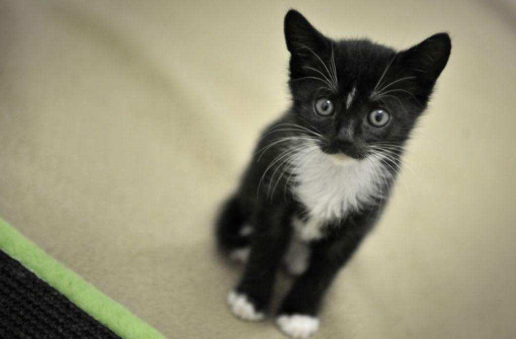 Katzen können das zehnfache ihres Körpergewichts erbrechen. Foto: dpa
