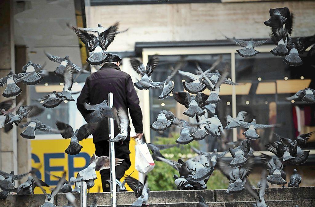 Zu viele Tauben sind in vielen Innenstädten ein Problem. Foto: Lichtgut/Achim Zweygarth