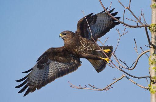 Vögel greifen Menschen an