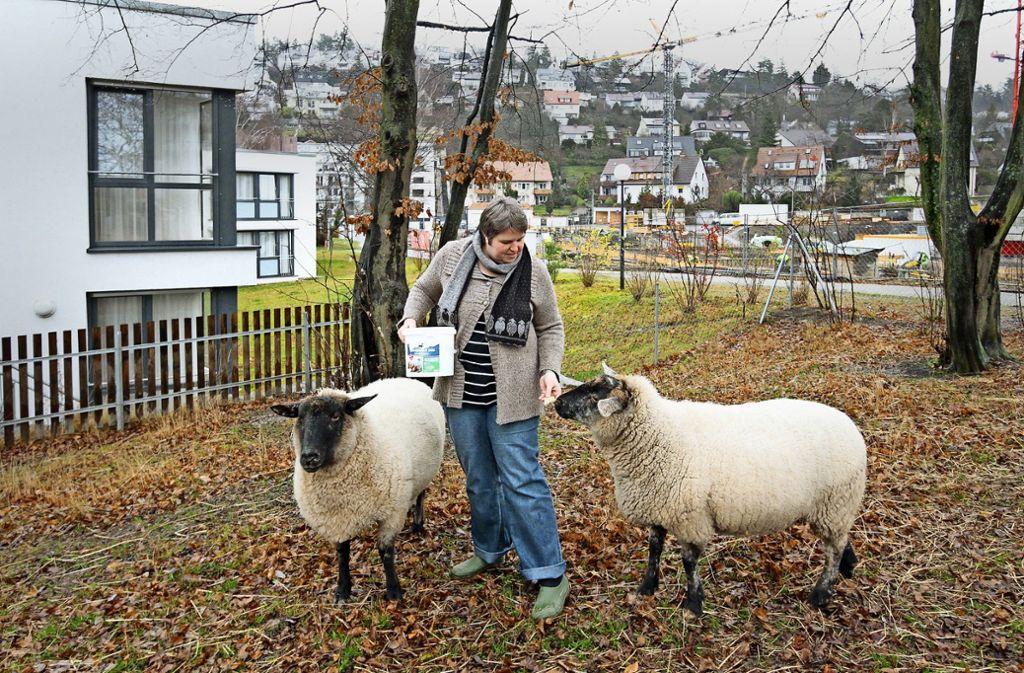 Unter der Woche  hat die Hauswirtschaftsleiterin Anika Eberhardt-Rech die Tiere gefüttert und betreut. Am Wochenende sind es ehrenamtliche Helfer gewesen. Foto: factum/Archiv