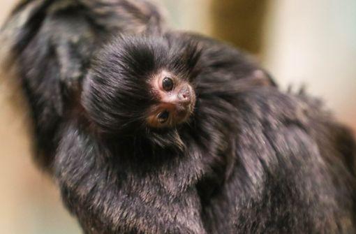 Die Affenfamilie wächst