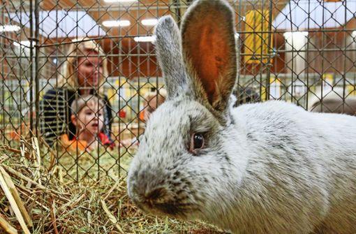 Prämierte Kaninchen und stolze  Fasane