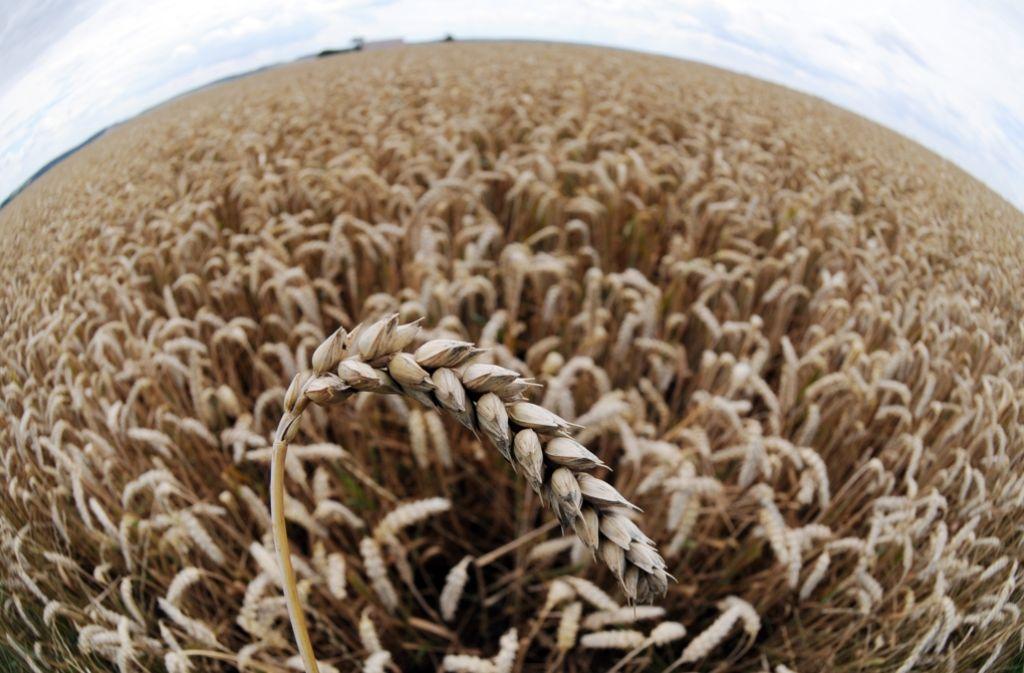 Die Welt als globales Weizenfeld – schön, aber gefährdet. Foto: dpa