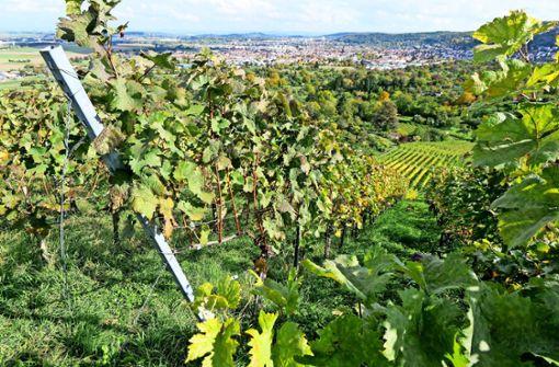Weingärtner trotzen der  Pandemie