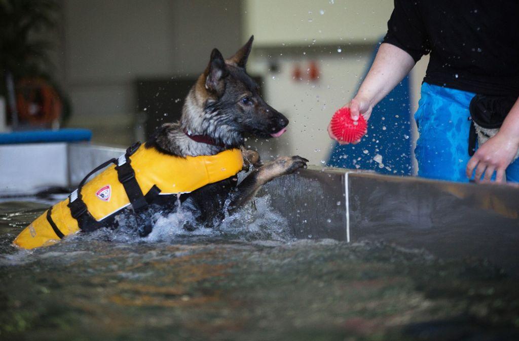 Im Nürtinger Hundeschwimmbad können Vierbeiner das ganze Jahr über schwimmen. Foto: Ines Rudel