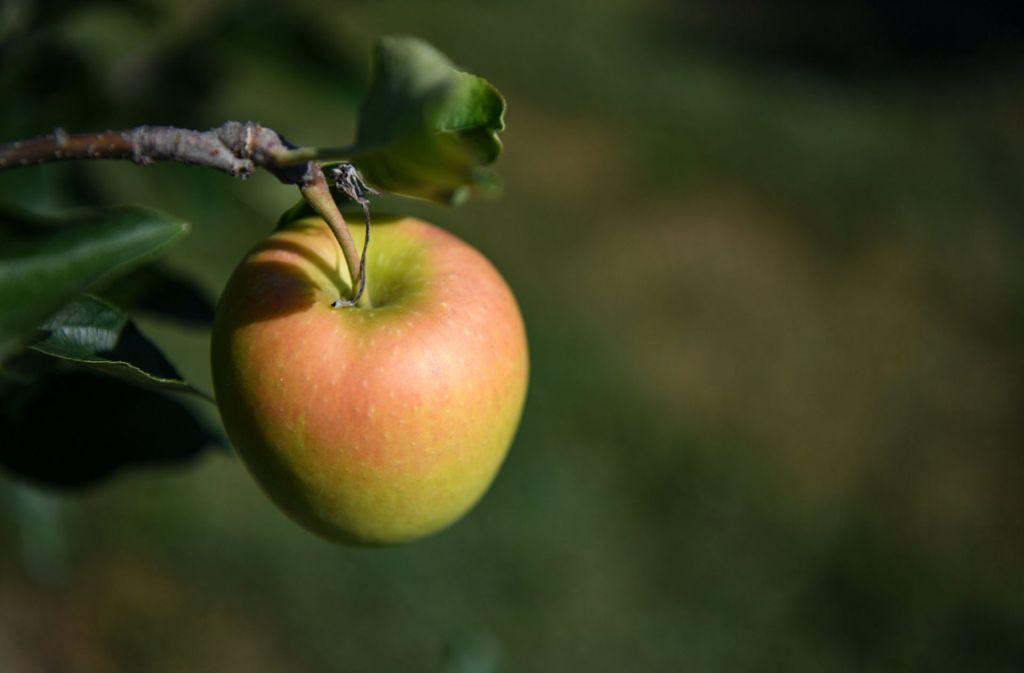 Ein Apfel am Tag schützt tatsächlich sprichwörtlich vor dem Arzt. Foto: dpa