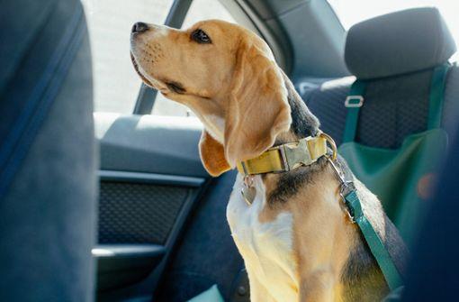 Tipps für die Ersthilfe bei Hunden in überhitzten Autos