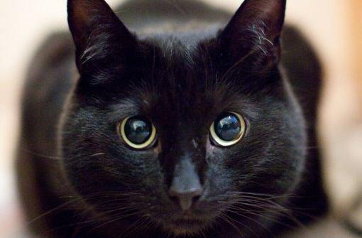 Katze von heißem Dach gerettet