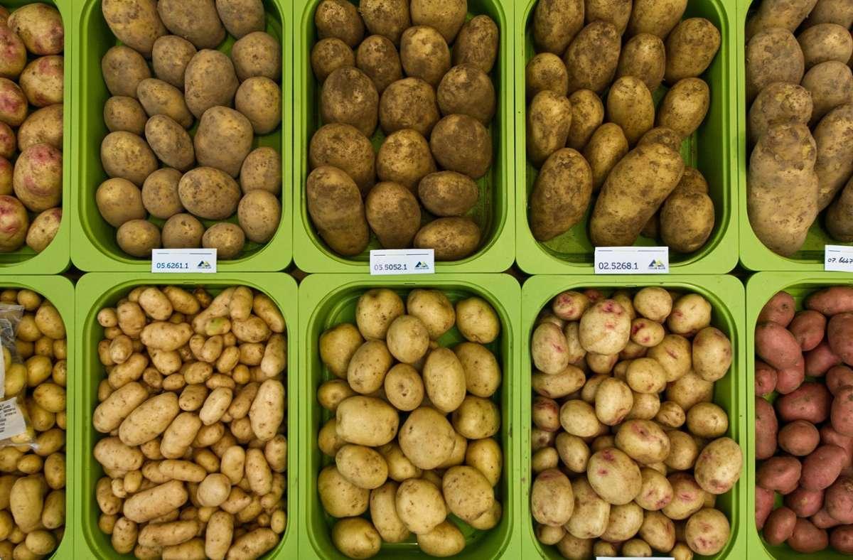 Welche Sorte darfs denn sein? In Murrhardt dürfen die Besucher bei einer Verkostung  ihre Lieblingskartoffel herausfinden. Foto: dpa/Ole Spata