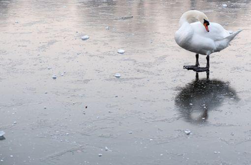 """""""Schwan"""" auf zugefrorenem See narrt Polizei"""