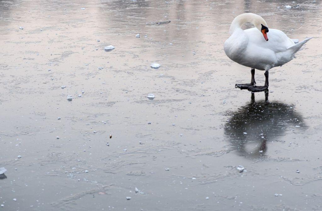 Wie die Attrappe in den See gelangte, ist unklar. (Symbolbild) Foto: dpa