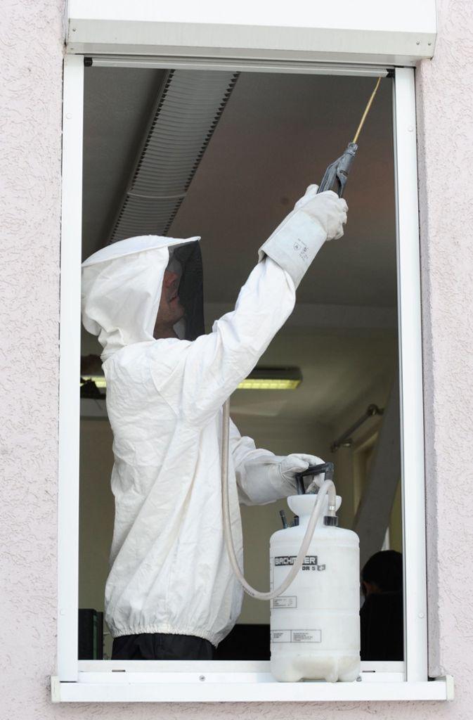 Ein Kammerjäger  steht mit einer Spritze und einem Schutzanzug im Fenster eines Büros in Stuttgart.  Foto: Bernd Weißbrod/dpa