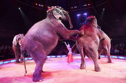 Circus Krone kritisiert Wildtierverbot auf dem Wasen