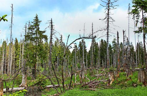 Droht ein neues Waldsterben?