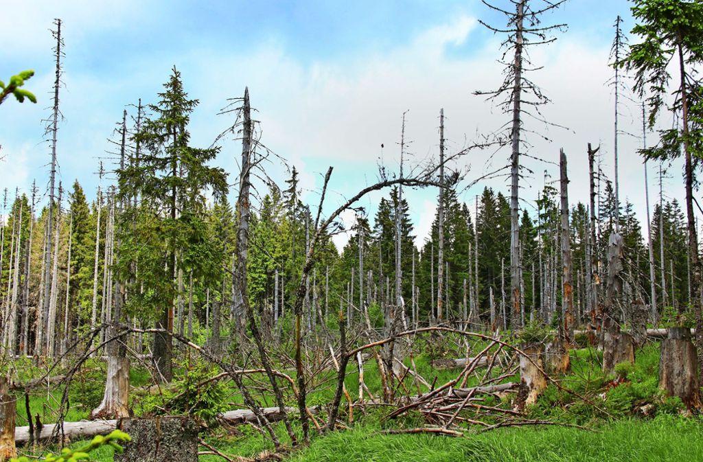 Fichten und Weißtannen leiden besonders unter der Trockenheit, der Hitzesommer 2018 macht dem Wald weiter zu schaffen. Foto: Adobe.stock.com/Christine