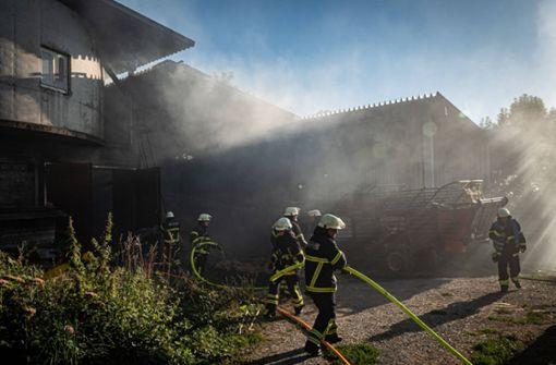 Feuerwehr rettet Kühe aus brennendem Stall