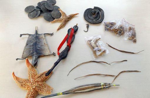 Zöllner entdecken Paket mit getrockneten Schlangen