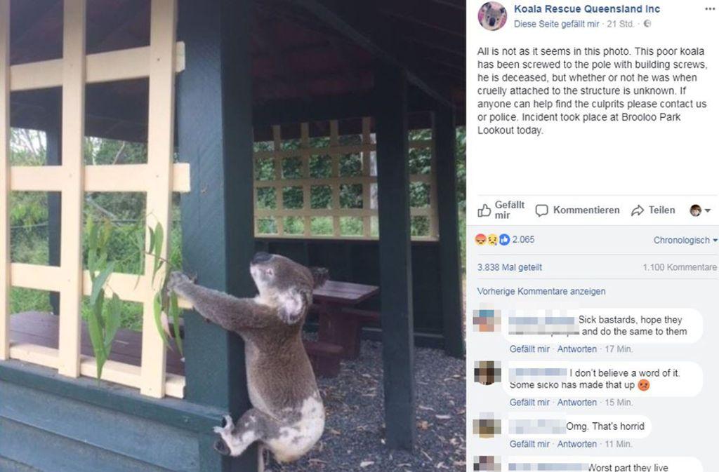 Dieses Foto ist in den sozialen Netzwerken zu finden Foto: Facebook/Koala Rescue Queensland Inc.