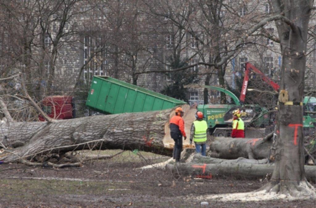 Viele alte Bäume mussten wegen S 21 weichen. Foto: dapd