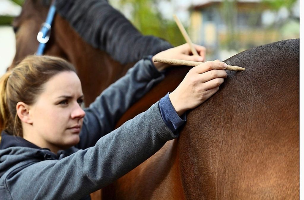 """Pia Senkowski erspürt mit den Händen, wo dem Pferd der """"Schuh"""" drückt. Foto: privat"""