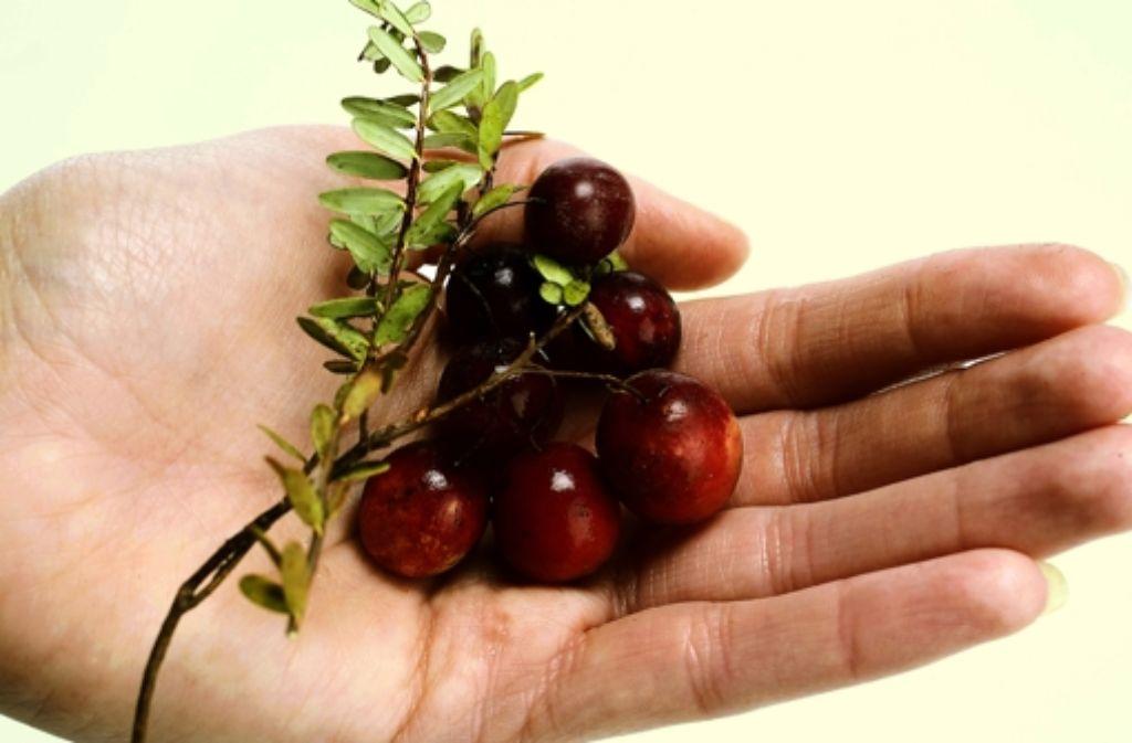 Eine Frucht Foto: Cranberry Marketing Committee