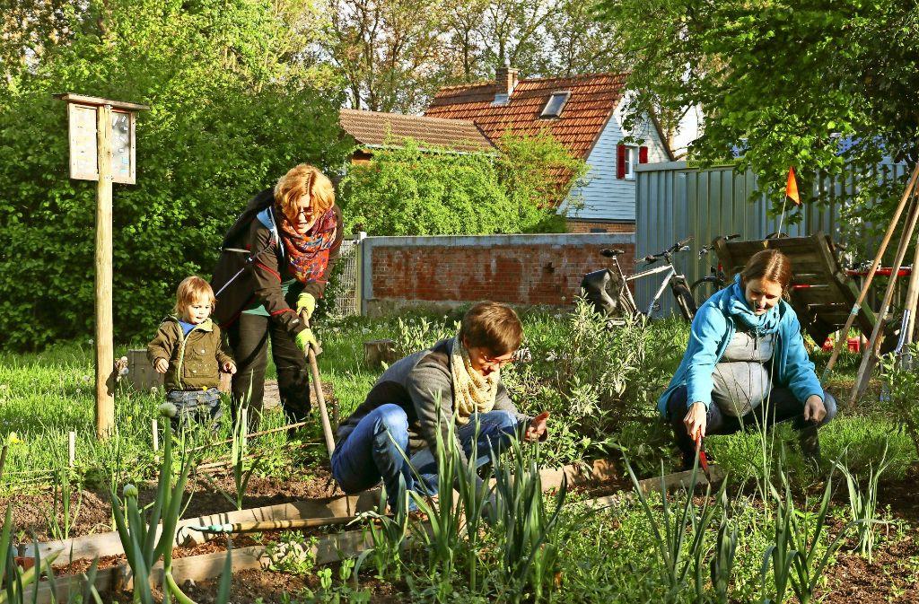 Was wächst hier, was nicht? Die Ludwigsburger Stattgärtner lernen jedes Jahr dazu. Foto: factum/Granville