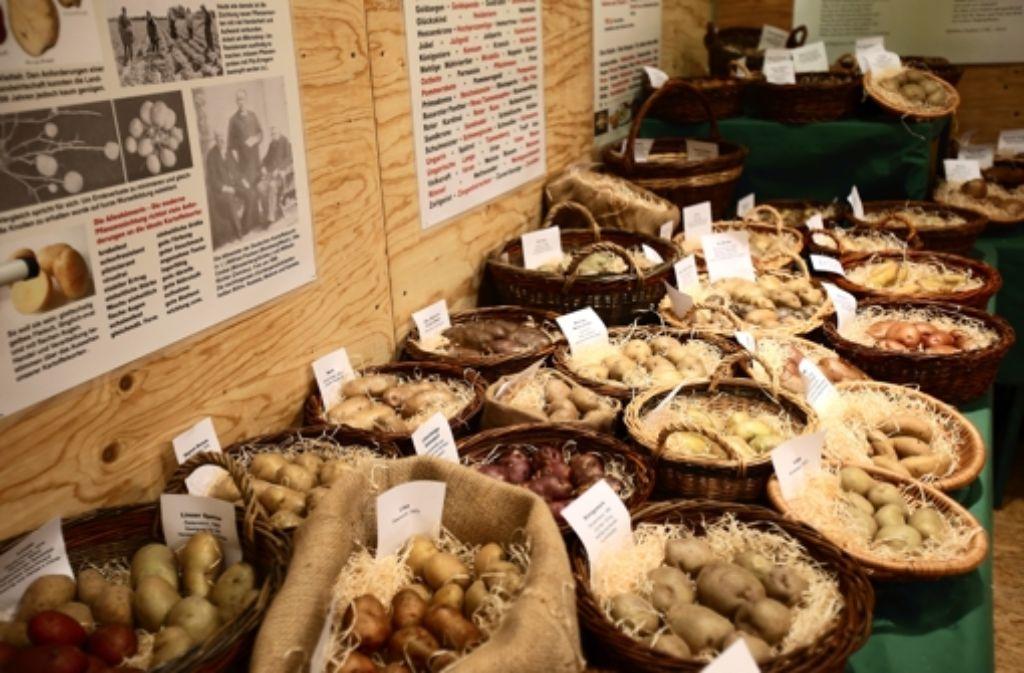 140 Kartoffelsorten sind in der Ausstellung zu sehen – ein Bruchteil der mehreren Tausend Sorten, die es weltweit gibt. Foto: