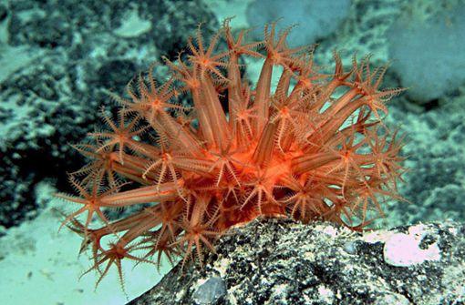 Korallenrot, Dunkelgrün – und Honig?