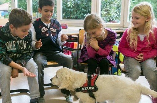 Im Klassenzimmer auf den Hund gekommen