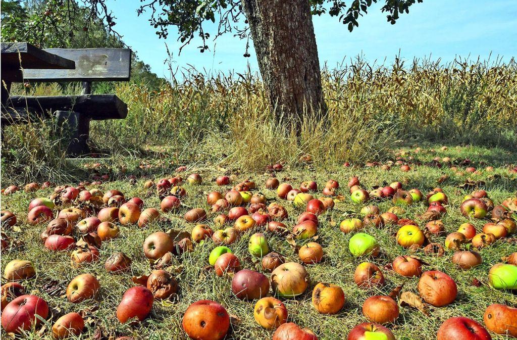 Dieses Bild ist zurzeit ein bekanntes: Äpfel über Äpfel, oft verfault. Foto: dpa