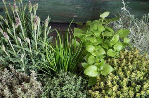 Winterhartes Gemüse & Kräuter