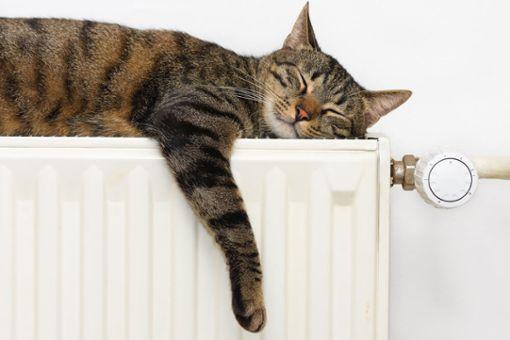 Bild von Katze, die auf Heizung liegt