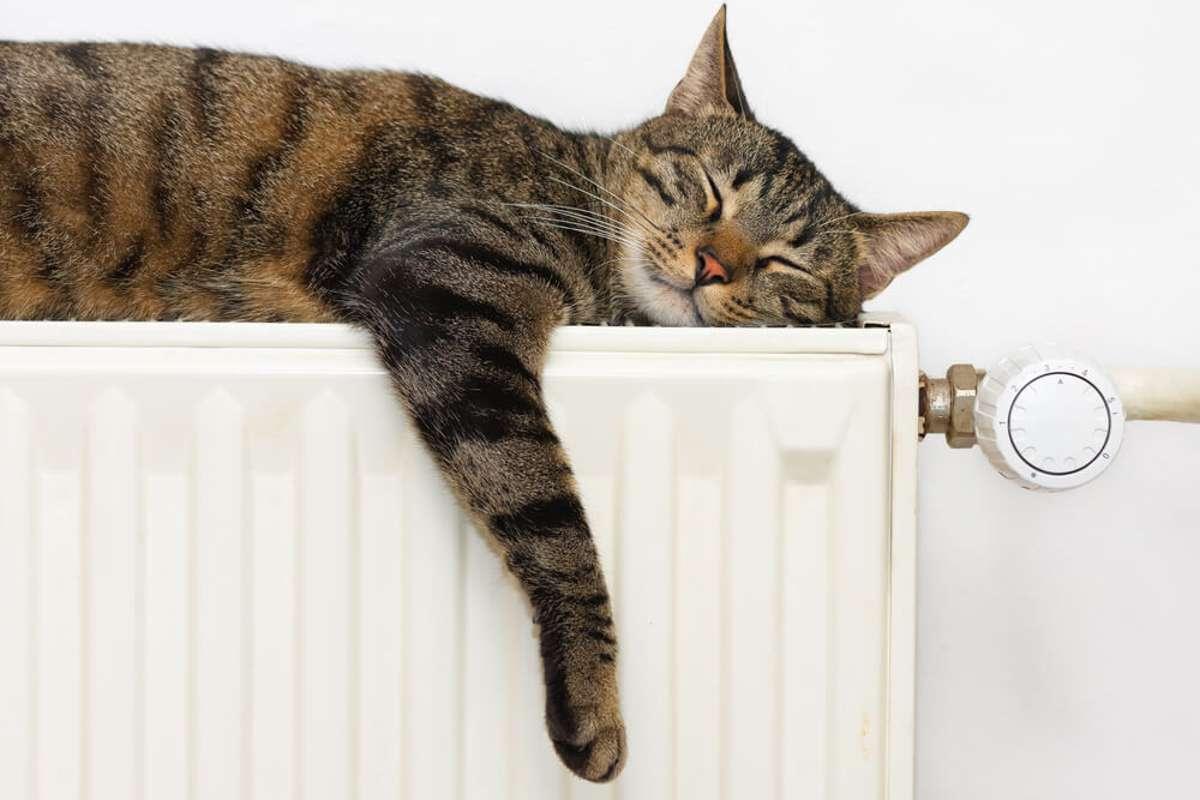 Mollig warm... Foto: Xseon / shutterstock.com