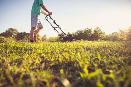 Vorschaubild zum Artikel Wie lange darf man Rasen mähen?