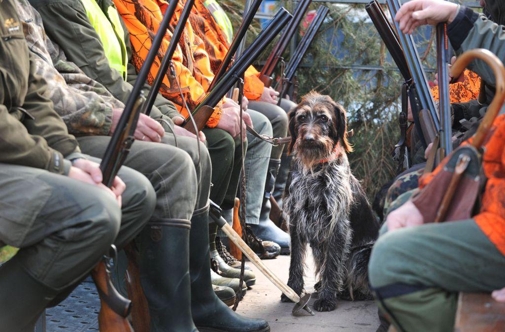 Über die Ausbildung von Jagdhunden gehen die Meinungen weit auseinander. Foto: dpa