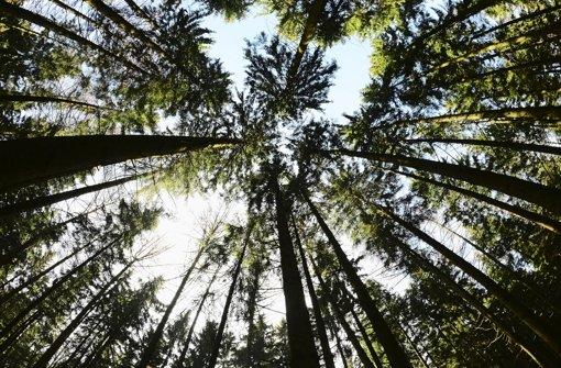 13.10.: Jäger findet Leiche im Wald