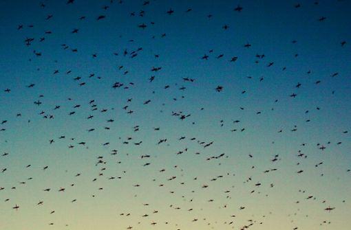 So rotten sich Mücken gegenseitig aus