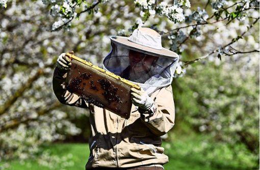 Warum Läuse Bienen krank machen