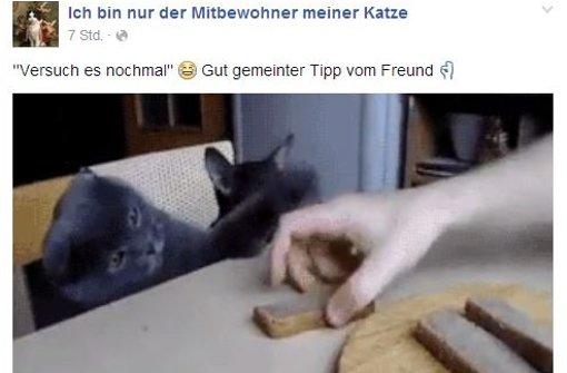 Katze klaut Brot vom Tisch