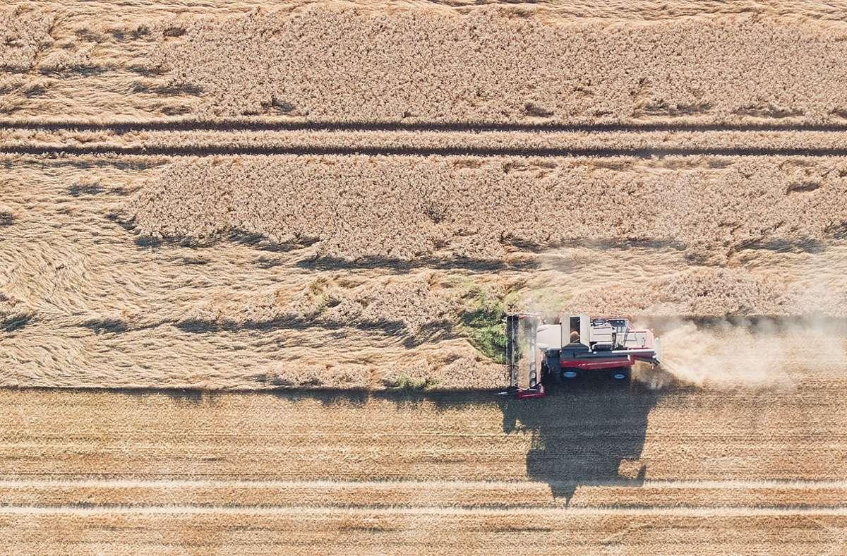 Milder Winter, trockener Frühling: Doch die Bauern im Südwesten sind insgesamt mit der Getreideernte zufrieden. Foto: dpa/Julian Stratenschulte