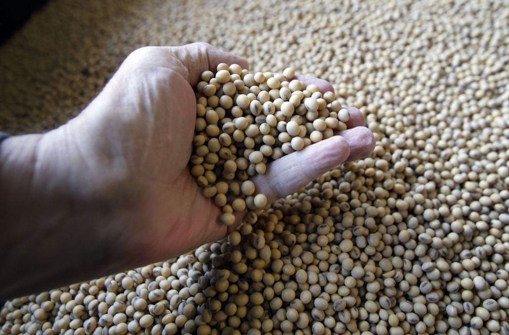 Getränke auf Basis von Soja sind etwas dunkler als Kuhmilch und schmecken nach Bohnen, leicht nussig und oft süßlich. Foto: AP