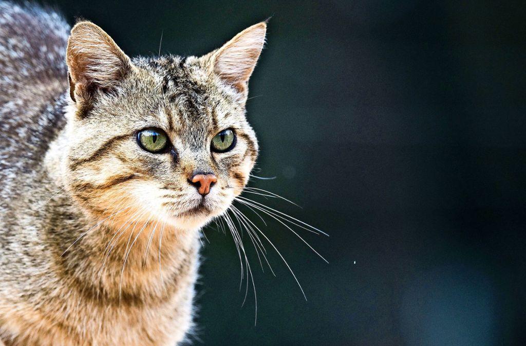 Eine Katze zeigte sich in Iserlohn als Fan von lauter Musik. Foto: dpa/Julian Stratenschulte
