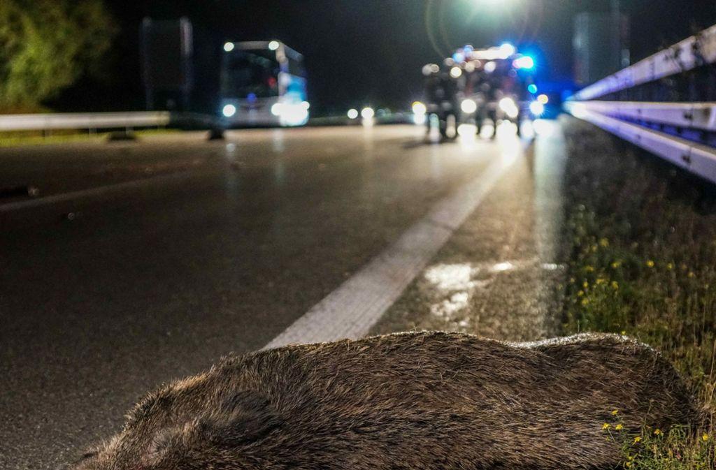 Sieben Wildschweine sind bei dem Unfall auf der A8 gestorben. Foto: SDMG/Kohls