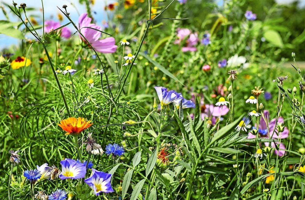 Mit einer großen Pflanzenvielfalt  können wertvolle Foto: pixabay