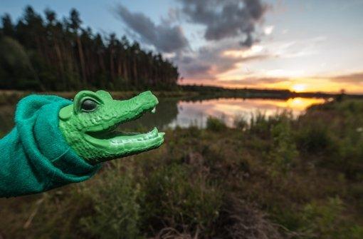 Ein Krokodil im Schwandorfer See?