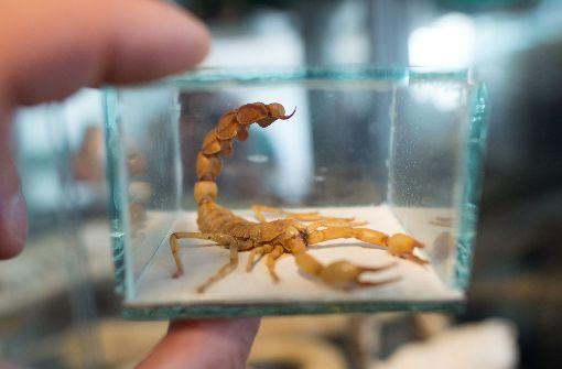 Skorpion sorgt für Panik unter Passagieren