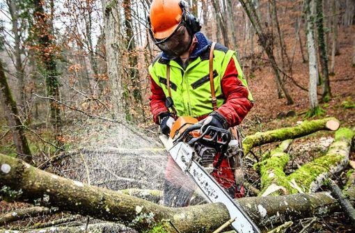 Ärger über zerfahrene Waldwege