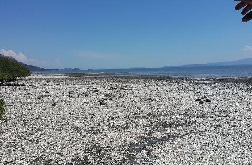 Massenweise tote Sardellen an Pazifikküste