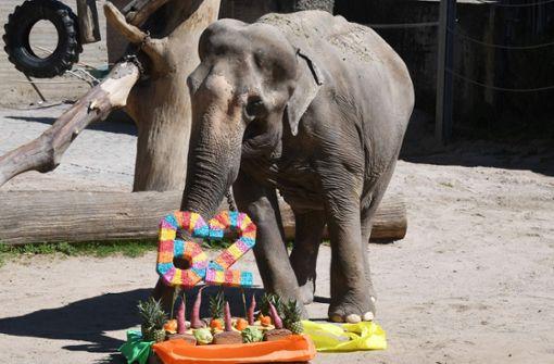 Elefantenkuh Rani gestorben
